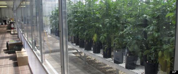 Food and Farm Biotech Tubers