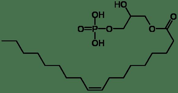 800px-Lysophosphatidic_acid