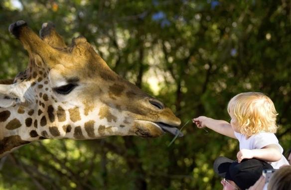 memory_giraffe_iStock_000001332912Large