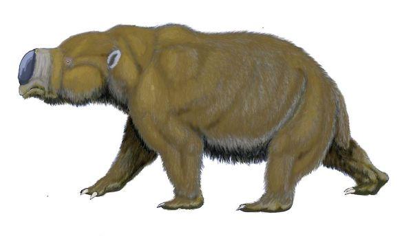 1024px-Diprotodon11122