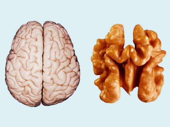 brain-walnut-getty-660x495