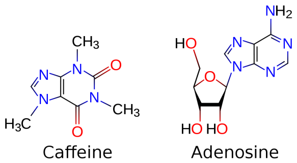 1024px-Caffeine_and_adenosine.svg