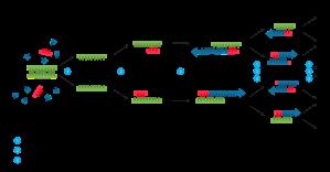 Polymerase_chain_reaction.svg