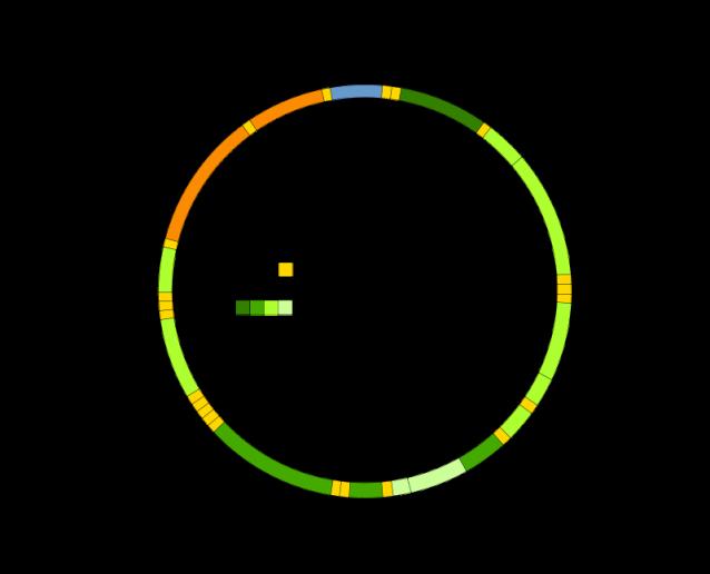 800px-Mitochondrial_DNA_en.svg