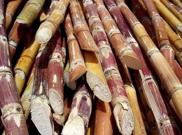 800px-Cut_sugarcane.jpg