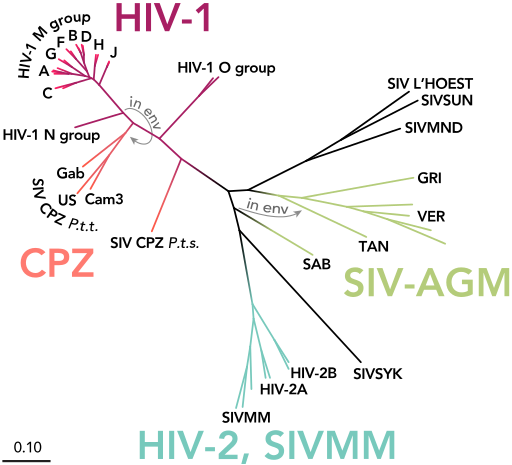 HIV-SIV-phylogenetic-tree_straight.svg.png