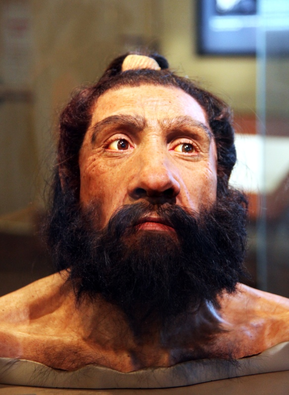 Homo_neanderthalensis_adult_male_-_head_model_-_Smithsonian_Museum_of_Natural_History_-_2012-05-17.jpg