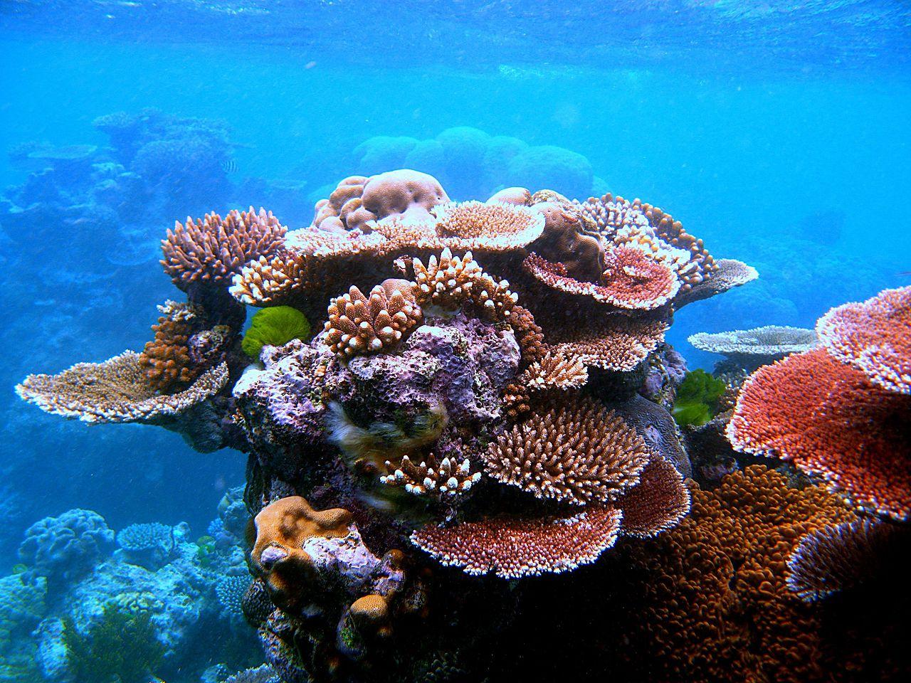 Coral_Outcrop_Flynn_Reef.jpg